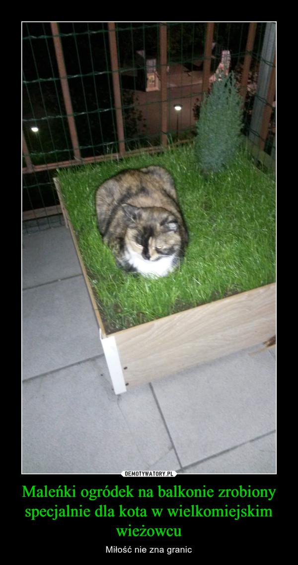 Maleńki ogródek na balkonie zrobiony specjalnie dla kota w wielkomiejskim wieżowcu – Miłość nie zna granic