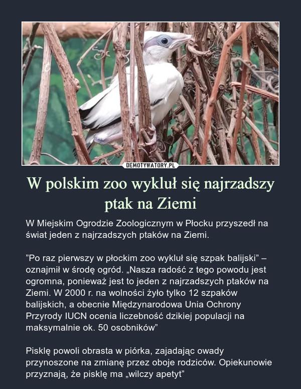 W polskim zoo wykluł się najrzadszy ptak na Ziemi