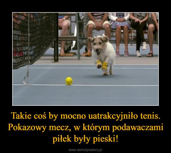 Takie coś by mocno uatrakcyjniło tenis. Pokazowy mecz, w którym podawaczami piłek były pieski! –