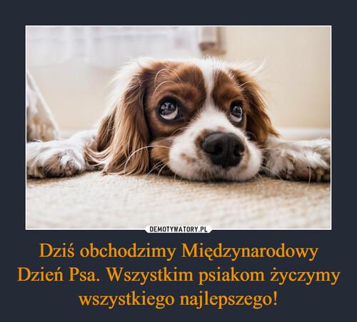 Dziś obchodzimy Międzynarodowy Dzień Psa. Wszystkim psiakom życzymy wszystkiego najlepszego!